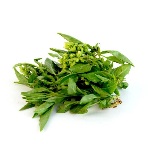 albahaca italiana por kilo
